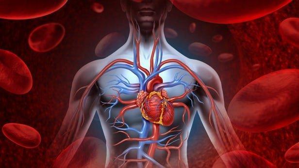 مولکولی که در طول روزه داری فراوری می گردد اثر ضد پیری دارد